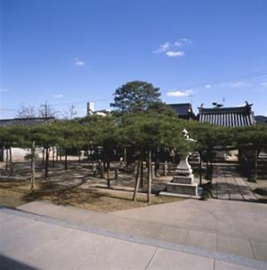 長束の蓮華松(ながつかのれんげまつ)(県天然記念物)