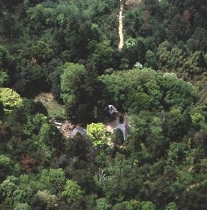 松笠観音の巨樹群(まつかさかんのんのきょじゅぐん)(市指定天然記念物)