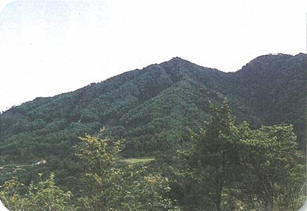 藤ヶ丸山(ふじがまるやま)