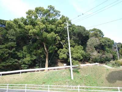 比治山貝塚(県史跡)