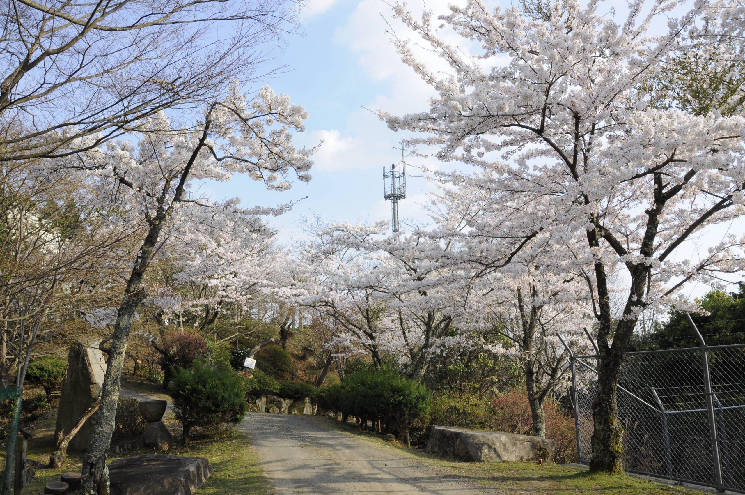 神乃倉山公園