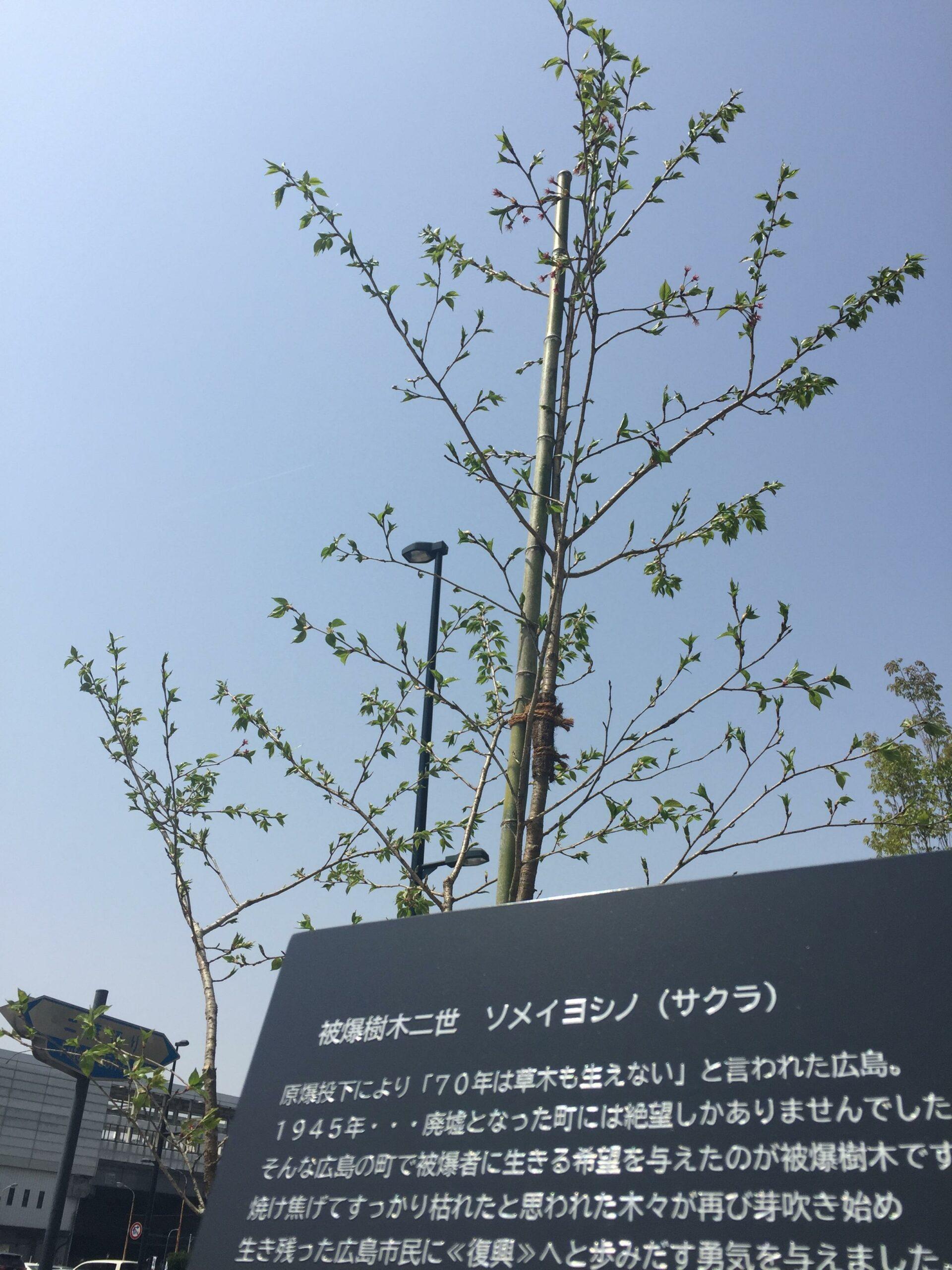 広島テレビ ピースコーナー