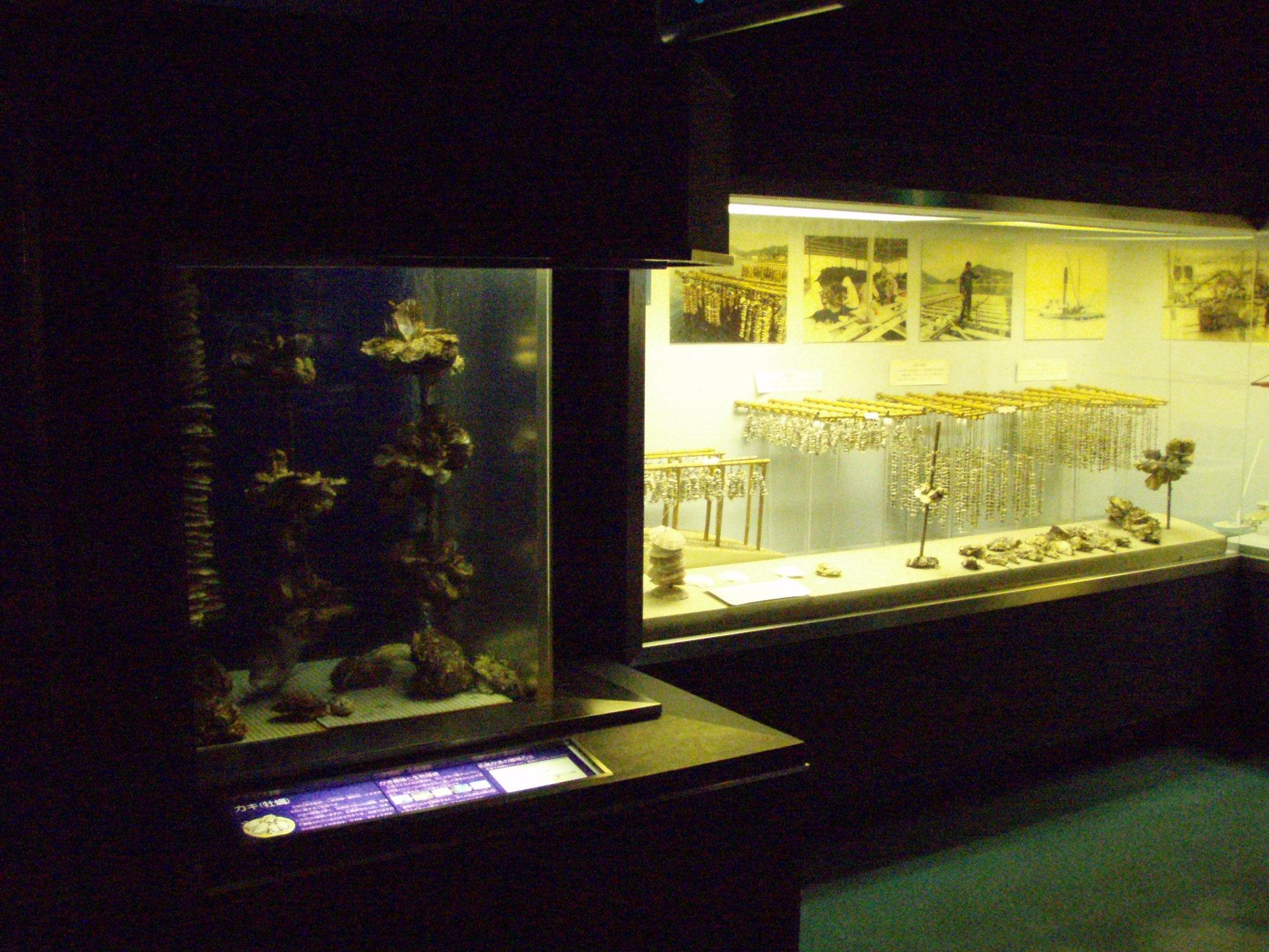 広島市水産振興センター(魚と漁業の資料展示室)