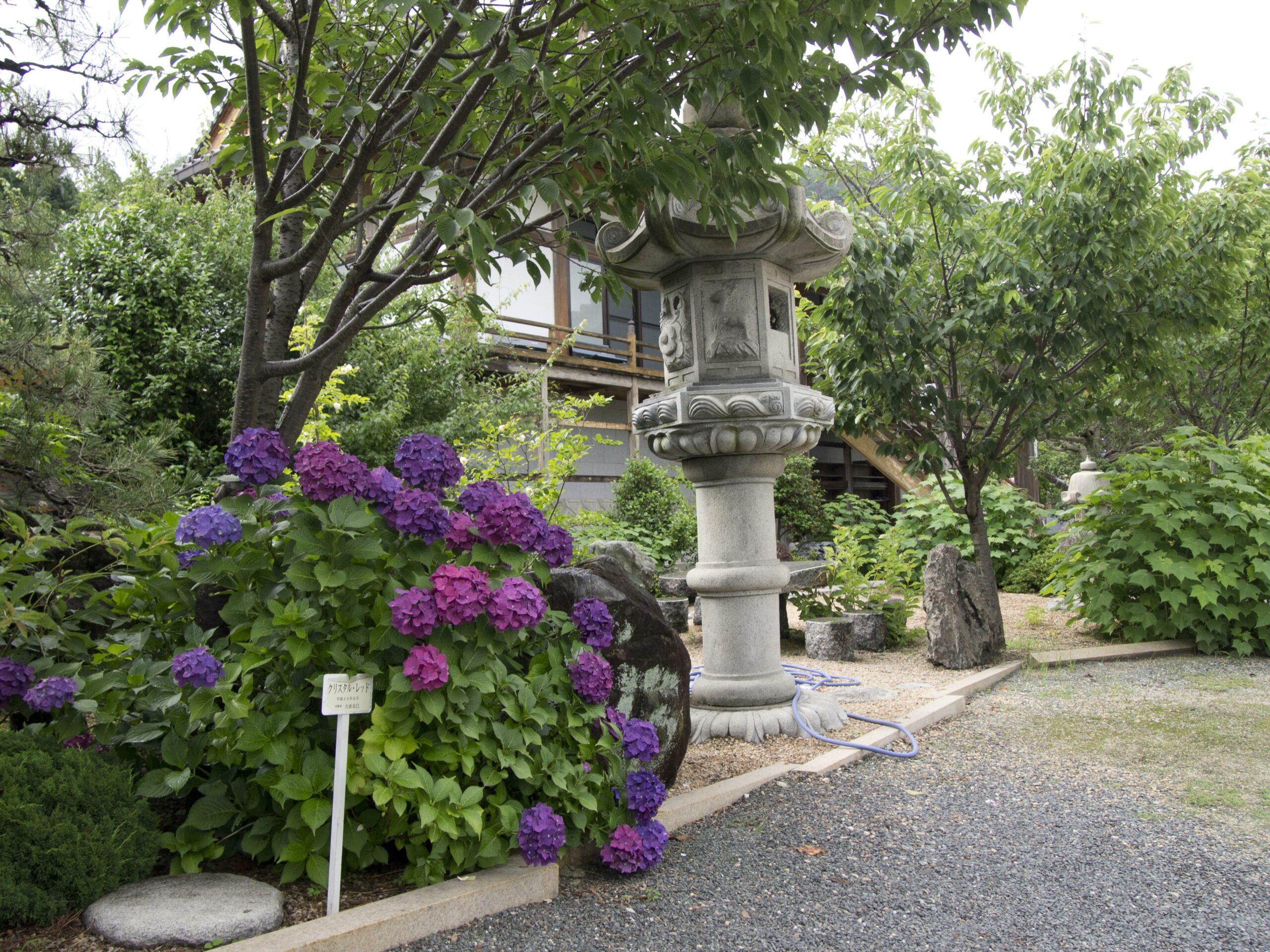 臨済宗(禅宗) 観音寺 アジサイ