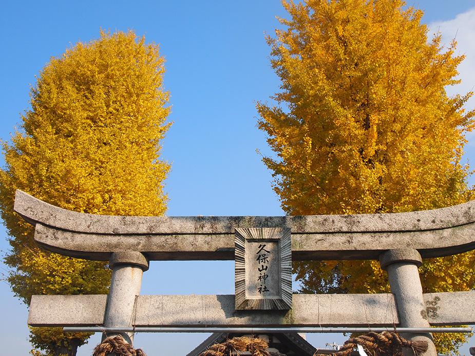 久保山神社 イチョウ